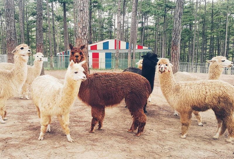 Khám phá Sở thú Zoodoo Đà Lạt - Kinh nghiệm vui chơi chi tiết nhất 2021, giá vé, các địa điểm vui chơi