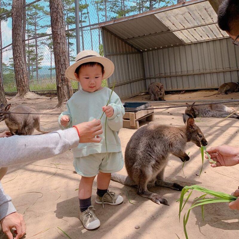 Khám phá Sở thú Zoodoo Đà Lạt - Kinh nghiệm vui chơi chi tiết nhất 2021
